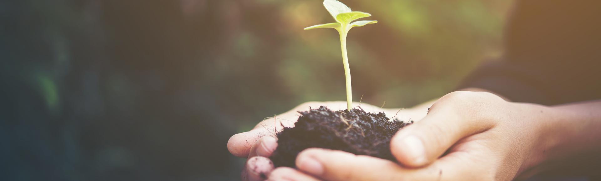 Çevre ve Doğa Dostu Haşere Kontrol Çözümleri